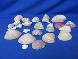 Sea Shells – Wide Variety