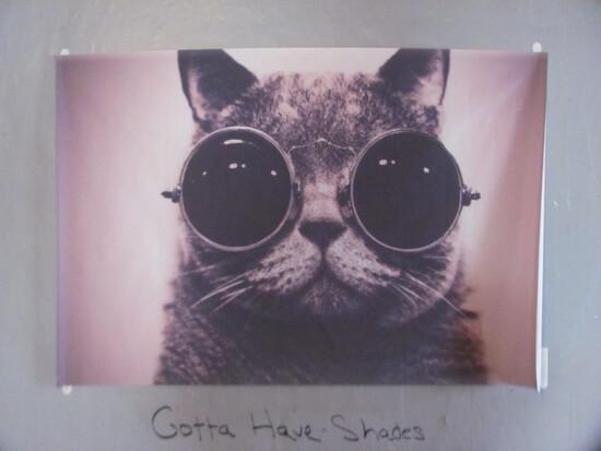 """Cool Cat"" poster 35 1/4"" x 23 1/2"" -vinyl plastic type material"