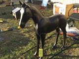 HORSE COLT ALUMINUM