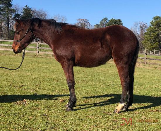 2019 BAY FILLY BY NRR CAT KING COLE