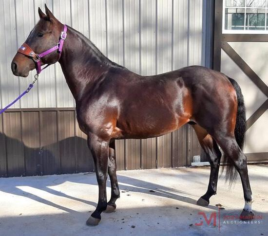 Hursts Little Doc 2015 Bay AQHA Stallion (Southerns Peptocat X Melody Of Sugar) NCHA Money Earner