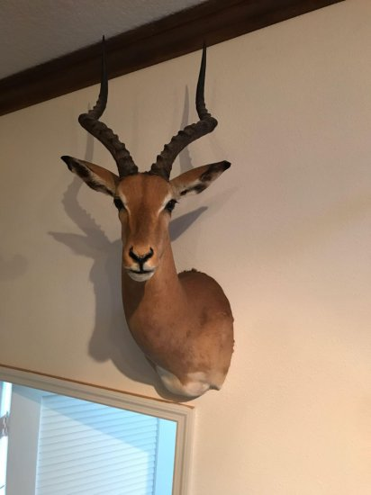 Impala, left facing wall mount