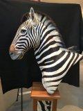 Zebra, left facing