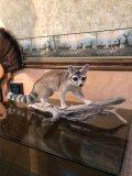 Genet or Ringtail Cat