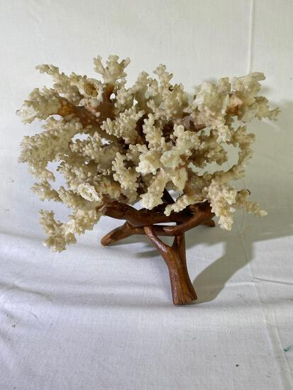 Coral with stand