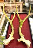 Pair of Antlers
