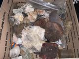 Variety of Rocks