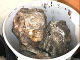 Rocks from 73 year old Collection - from Lakewood Estate - 50lbs