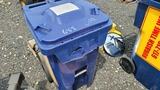Rolling Bin With Contents