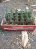 Coca Cola Crate with Bottles (Local Pick Up Only)
