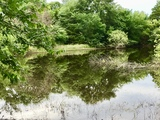 Tract 2: 59 acres w/small stock pond on sandy loam soil and a nice mix of pasture and mature trees
