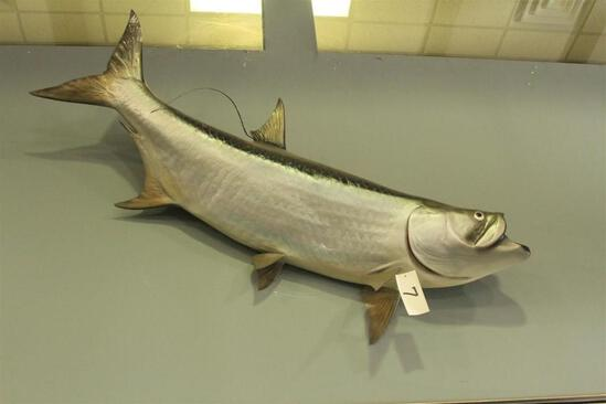 Tarpon fish mount
