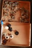 2 Boxes of Antique Door Knobs