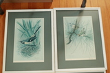4 Framed Signed Bird Prints