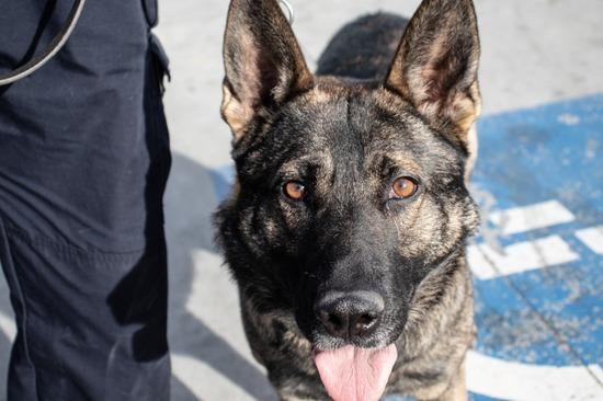 Reno Police Department K9 Unit