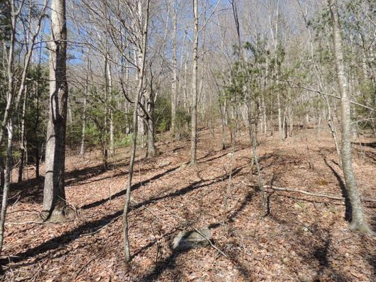 31.69 Acres Recreational & Hunting Land Located in Beautiful Smyth County, Virginia!