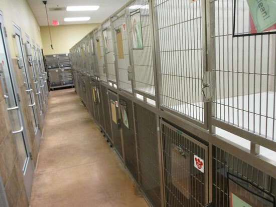Multi - Cage Kennel
