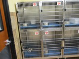Rolling 4 Cage Kennel