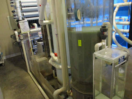 Full Aquarium Filtration System  -  Does NOT Included the Tanks