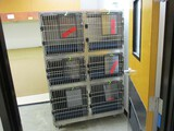 6 Cage Rolling Kennel