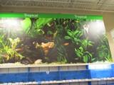 Fish Wall Graphics
