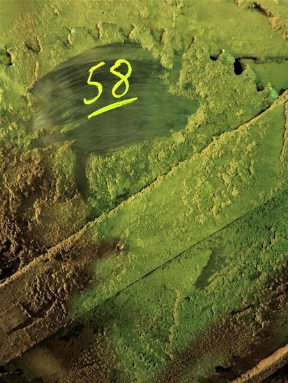 "56"" Saw Blade"