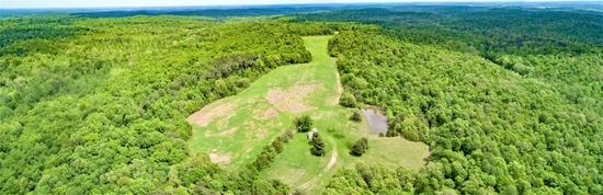 209 Acres Prime Timberland / Hunting Paradise