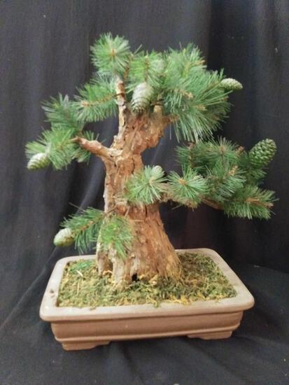 Simplistic artificial bonsai pine tree