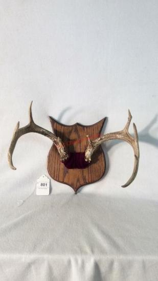 Mounted Antler Knife Holder