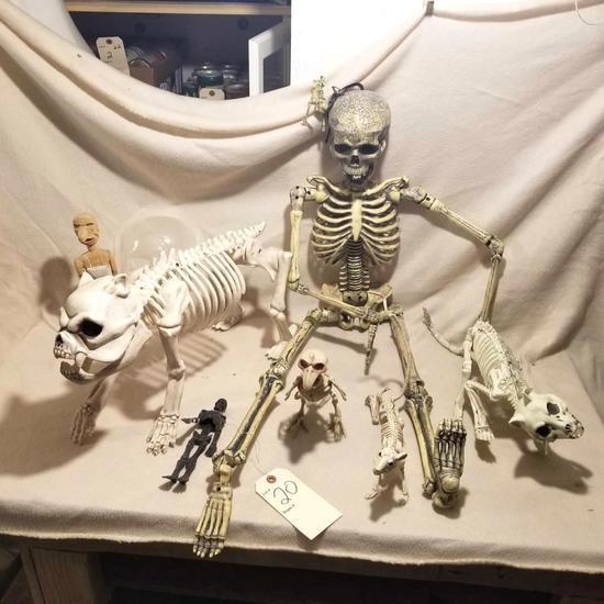 Various plastic bone sets