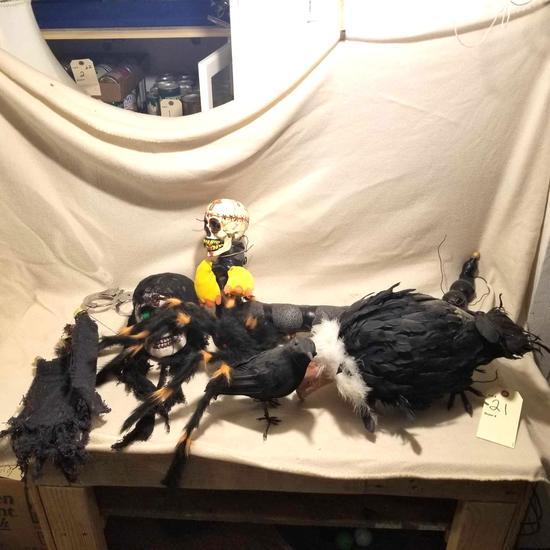 Display crow, buzzard, skulls and spider
