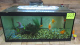 40 gal breeder fish tank with equipment and food