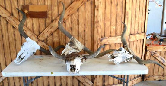 (5) CTLR Registered Texas Longhorn Skulls