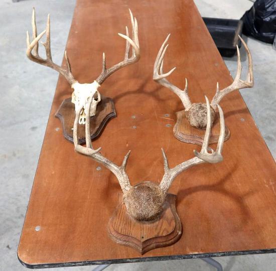 3 Whitetail Deer Antler Mounts