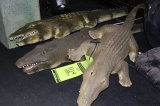Five Alligators