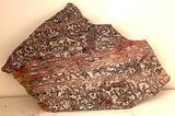 Fossil Slab