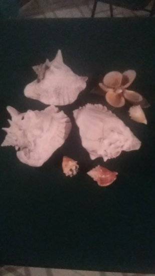 Lot of Seashells