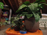2 Artificial Plants in  Wood and Tin Planters