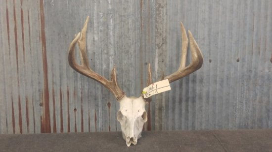 5x4 Whitetail skull lots of character & great color