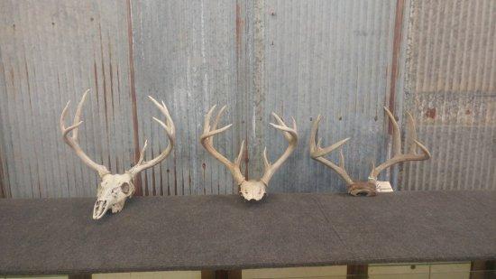 3 Whitetail racks