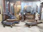 Taxidermy , Furs , & Rustic Decor Day 2