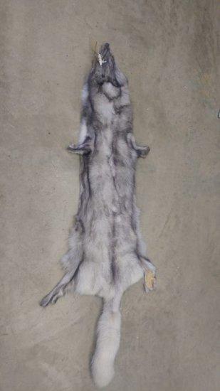 """Blue Fox fur fresh garment tanned 62"""" long"""