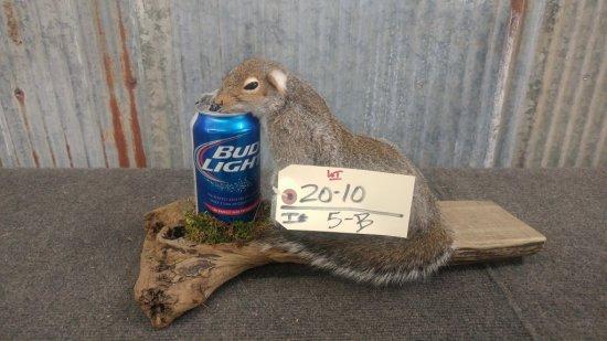 Drunken Squirrel new mount
