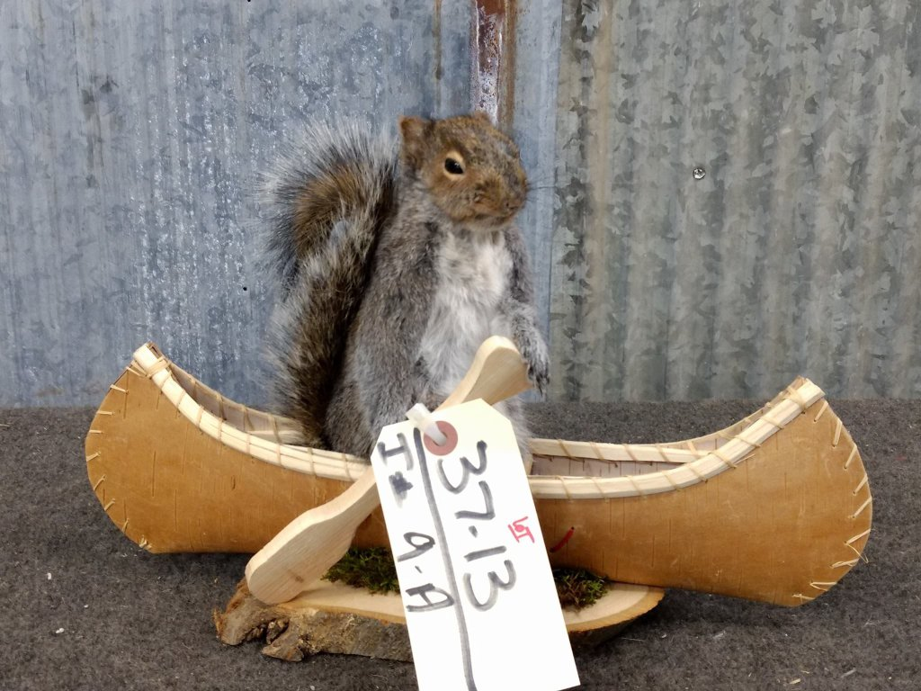 "Squirrel In A Birch Bark Canoe New Mount 9"" tall X 14"" long"