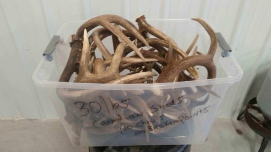 30 lbs net weight of brown Canadian sheds ranging from 50's and 60's