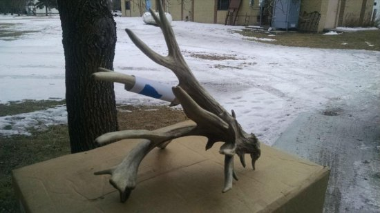 "125"" Preserve Whitetail Shed"