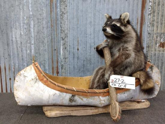 Full Body Mount Raccoon In Native American Made Birch Bark Canoe