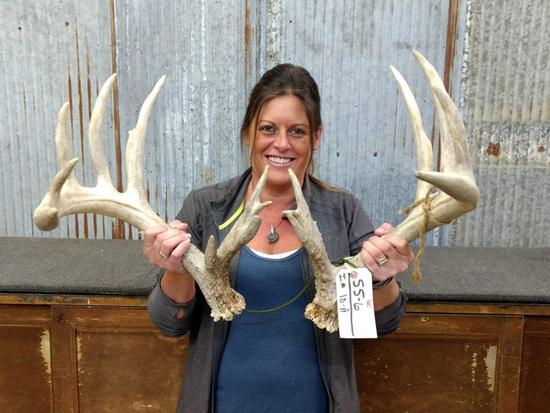 """Pair Of Whitetail Sheds Right 95"""" Left 94"""" Good Color Great Typical Look"""