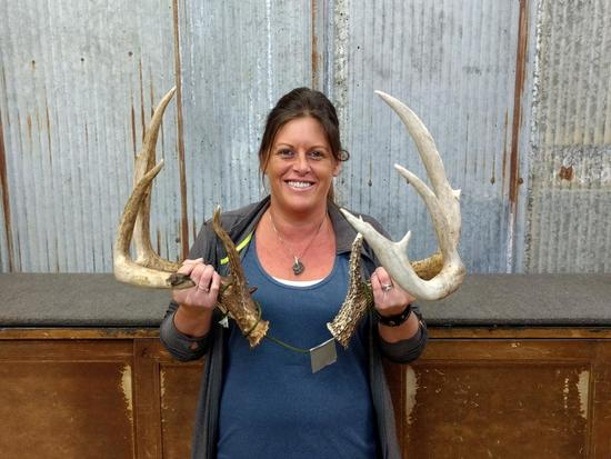"""Wild Texas Whitetail Sheds 160 class 13"""" & 14"""" G2S"""