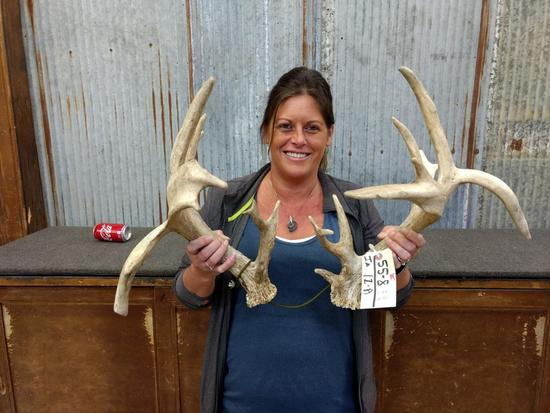 """Whitetail Sheds Double Drop Tines Palmated Good Color Right 95"""" Left 94"""""""